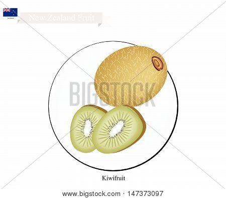 New Zealand Fruit Illustration of Kiwifruit or Chinese Gooseberry. One of Most Popular Fruits in New Zealand.