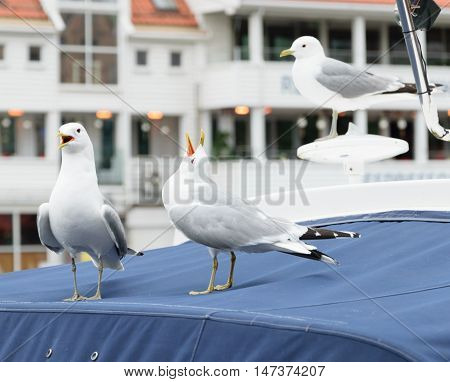 Gulls on the roof of the boat