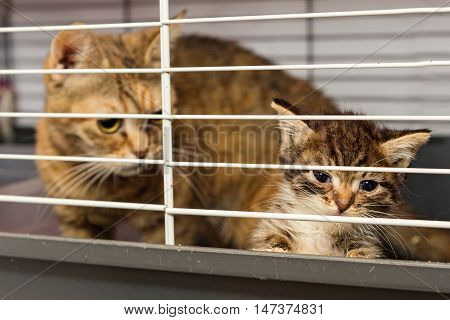 Cat and kitten in a cage of a shelter for lost Pets