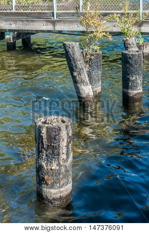 A closeup shot of burnt pilings at Coulon Park in Washington State.