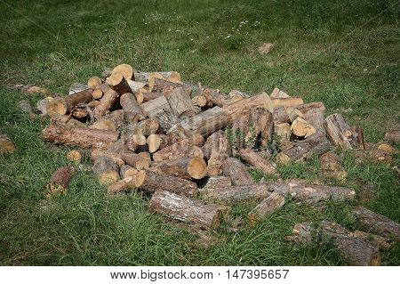 firewood on the green grass in forest