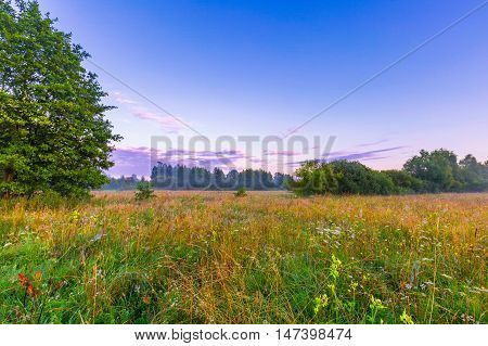 Calm And Tranquil Place With Untouched Wild Meadow At Sunrise
