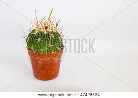 green cactus with red pot white background