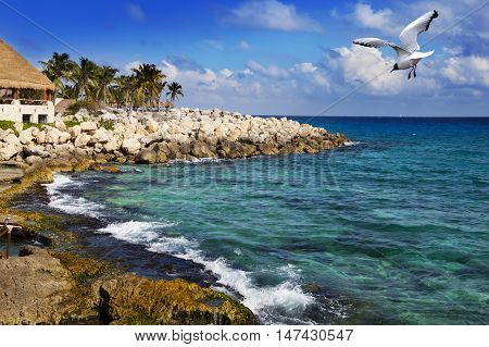 The sea coast in park near Cozumel Mexico