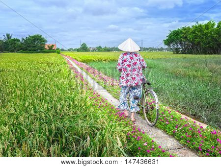 Long An, Vietnam - September 6th, 2016: Farmers leads bicycles to go the end of road in morning planting flowers in rural Mekong Delta, Vietnam