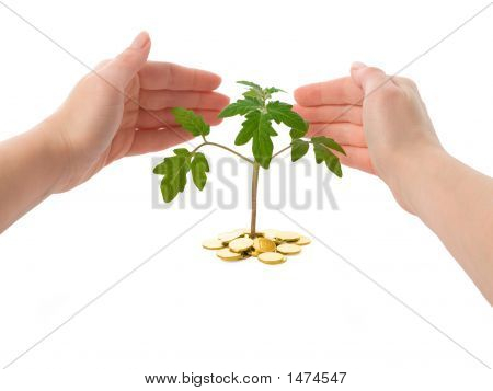 Hands Protecting A Plant - Isolated