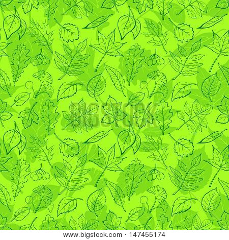 Seamless Background, Green Summer Leaves Contours and Silhouettes Oak, Iberian Oak, Raspberry, Willow, Liquidambar, Hawthorn, Aspen, Ginkgo Biloba, Elm Karagach, Birch, Ash, Chestnut, Sambucus. Vector