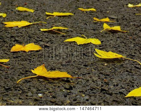 Fallen yellow leaves during autumn in park on asphalt walkway