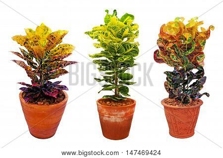 houseplants in clay pot isolated on white background