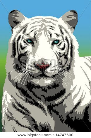 Portrait of white Bengal tiger looking intently (With several layers)