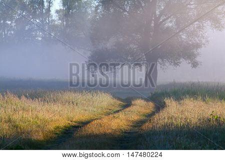 Early Foggy Morning