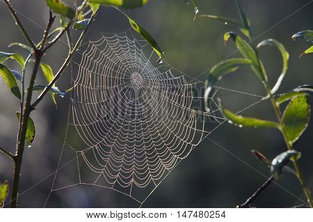 Cobwebs On The Grass