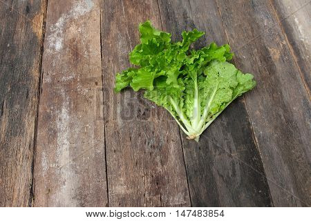 Chinese cabbage organic vegetables on a wooden table. Insect eat hole in the leaf. Top view Close up