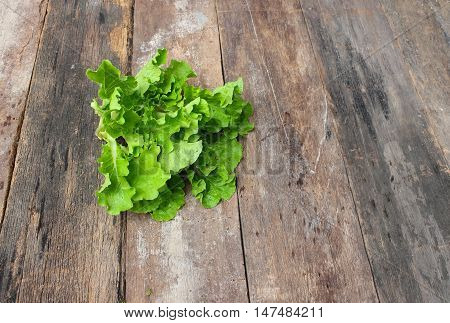 Chinese cabbage organic vegetables on a wooden table. Insect eat hole in the leaf. Close up Select focus front  with shallow depth of field and copy space background.