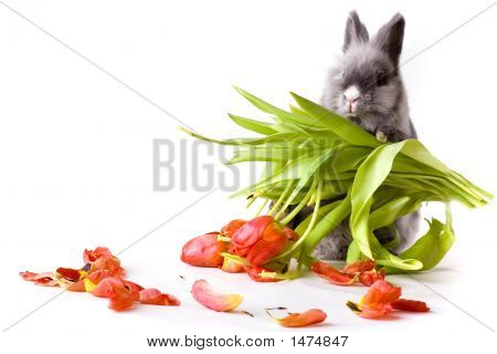 Bunny Holding A Bouquet Of Tulips