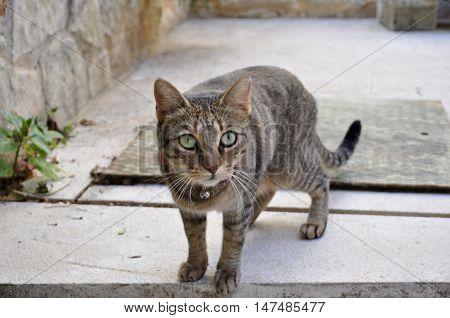 gatto trovato per le strade di orsera
