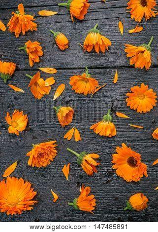 Flowers of calendula filling the dark wood surface