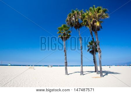 A typical beach view with palm trees in Santa Monica, California, USA