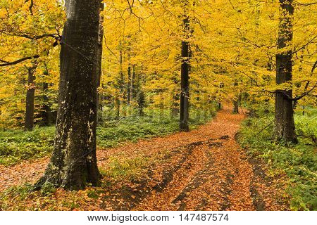 Detail of forest path in autumn colors, forest at mountain Goc, Serbia