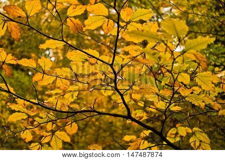 Detail of autumn colors in a forest at mountain Goc, Serbia