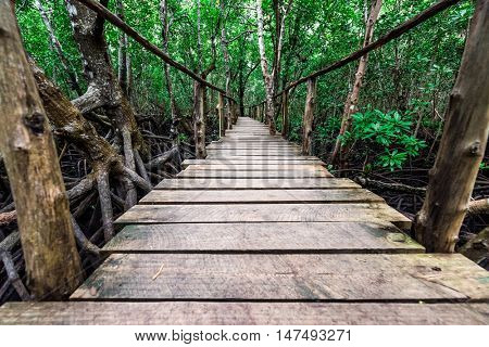 beautiful green mangrove forest with wooden path inside in Zanzibar, Africa
