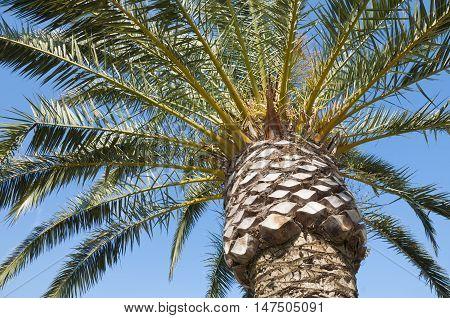 Palm Tree Fragment