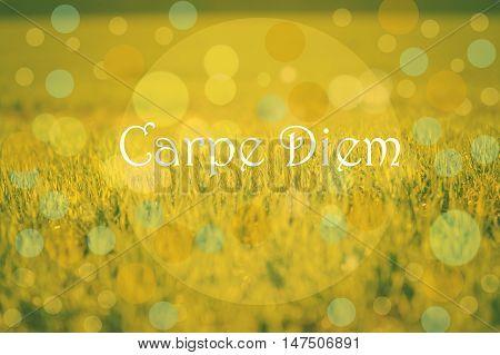 Carpe diem message on a green grass background