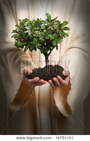 Jesus hands holding small tree isolated over white background