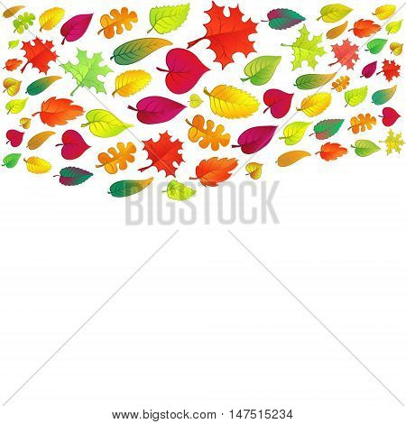 Colorful autumn leaves flying on white background.