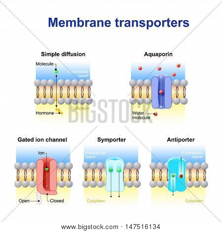 Mechanisms for the transport of ions and molecules across cell membranes. Types of a channel in the cell membrane: simple diffusion Aquaporin Gated ion channel Symporter and Antiporter.