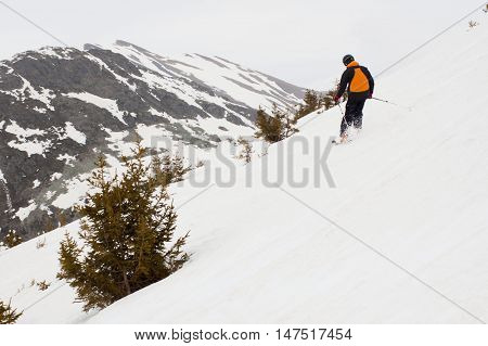 Skier Turning Down The Mountain Between Pine Trees