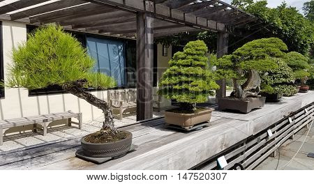 Bonsai and Penjing landscape with miniature evergreen trees