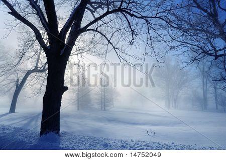 Winter landscape with sun breaking through fog