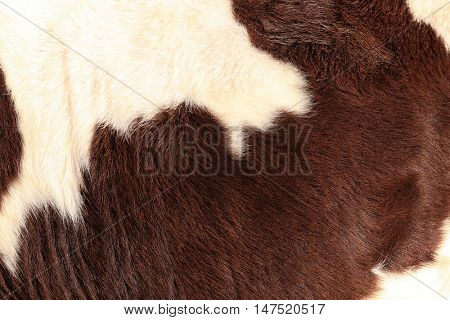 Brindled cow hide, close up