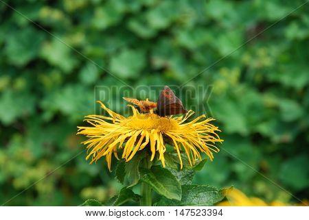 kelebekler ve çiçeklerin aşkı kısa fakat bir ömür boyu sürecek kadar uzun