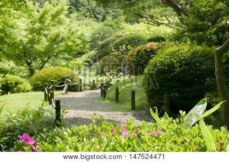 Pink Flowers, Green Plants, Tree, Footpath In Zen Park