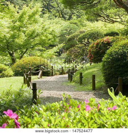 Pink Flowers, Green Plants, Bridge, Footpath In Countryside