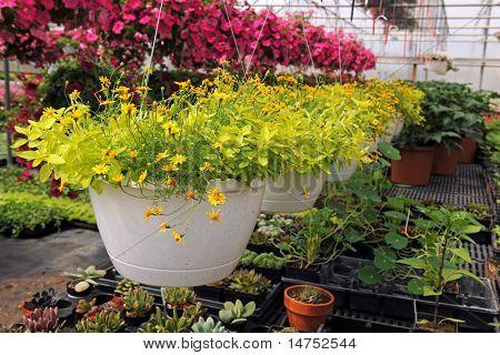 Blumen und Pflanzen im Kinderzimmer