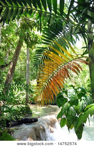 Tropical rain forest in Ocho Rios Jamaica