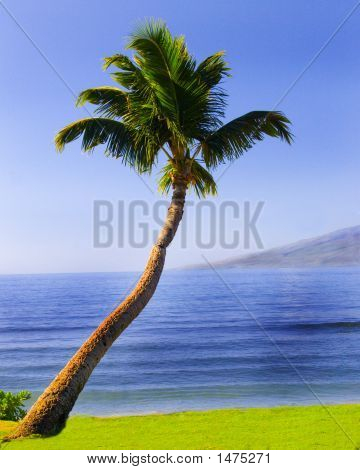 Palm Tree In The Islands