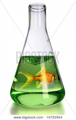 Goldfish in laboratory flask over white background - With clipping path
