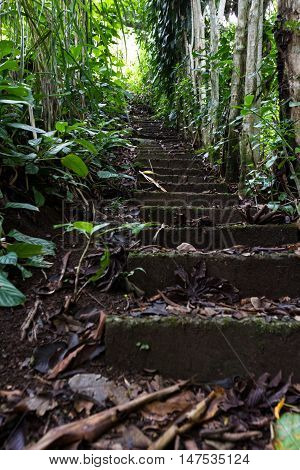 Stairway In The Rain Forest