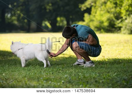 Man Cleans The Dog German Spitz In Park
