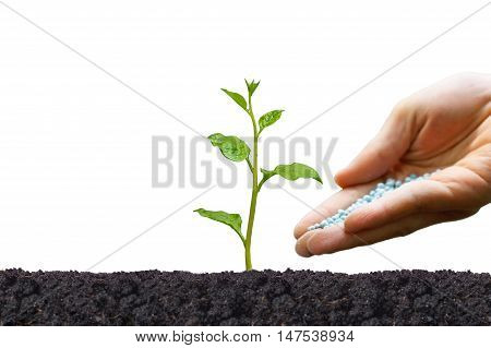 Hand giving chemical fertilizer to a plant isolated / Agriculture