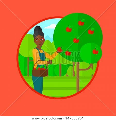 An african-american woman holding a basket full of apples. Young gardener harvesting apples. Young female farmer collecting apples. Vector flat design illustration in the circle isolated on background