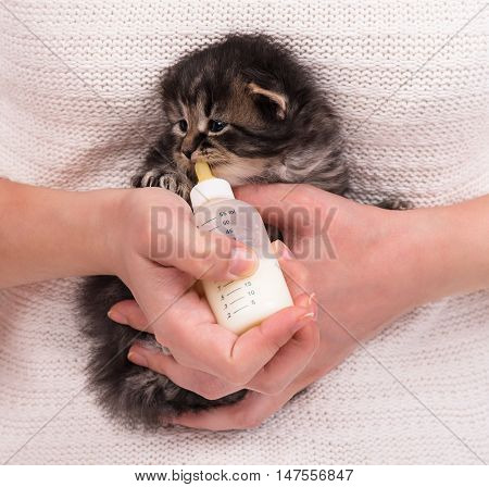 Woman feeding newborn kitten with bottle of milk over white sweater background