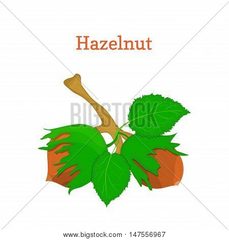 Vector illustration of hazelnuts. Branch hazel nut tree with with leaves. Filbert nuts can be used as packaging design element chocolate, , muesli, printing brochures on healthy and vegetarian diet