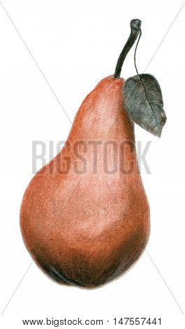 Hand drawn sepia and sanguine sketch of a pear illustration isolated on white