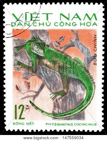 VIETNAM - CIRCA 1966 : Cancelled postage stamp printed by Vietnam, that shows Physignathus cocincinus.