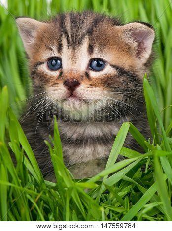 Cute little kitten over bright green grass background